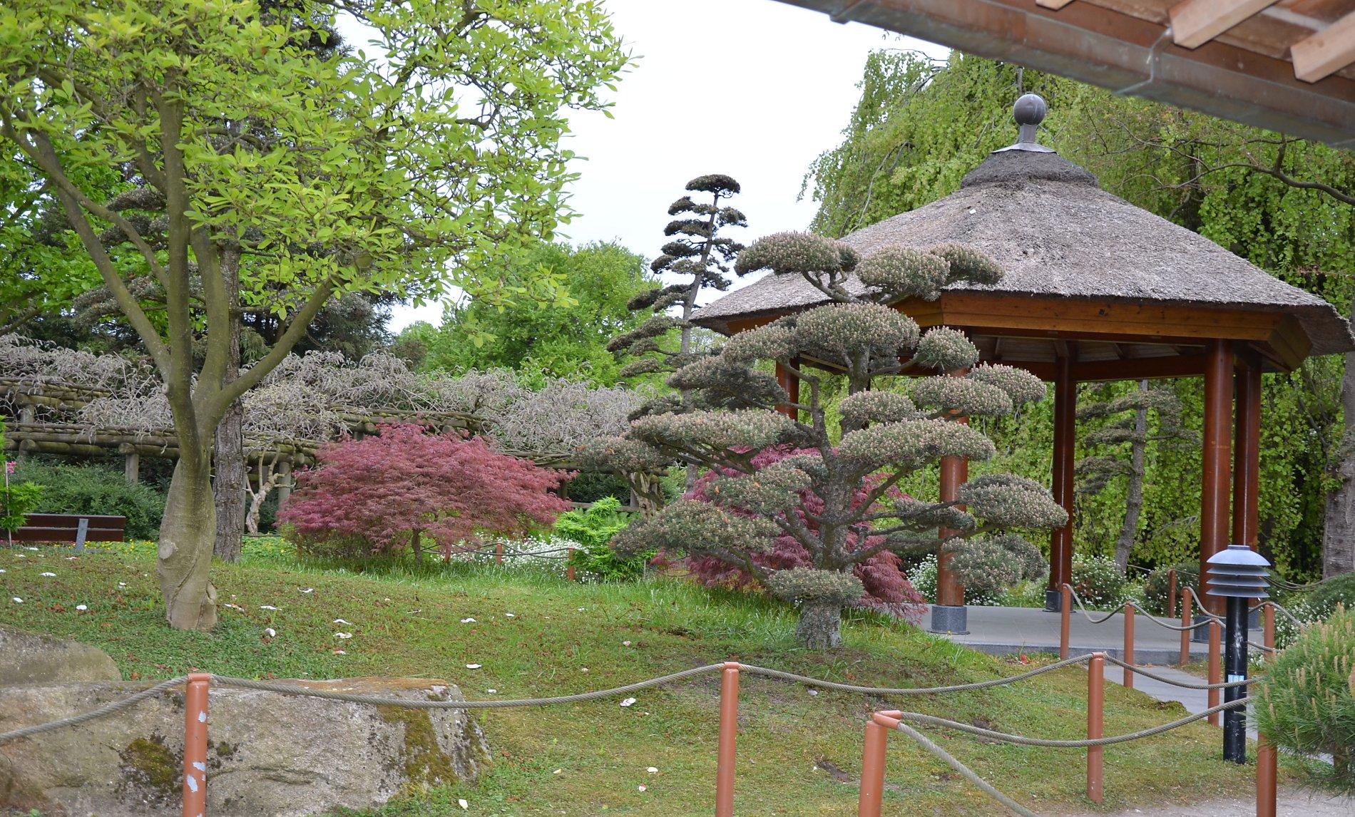 Blick von einer Meditationsbank hinter dem Teehaus auf den Garten